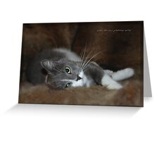 Furry Cat © Vicki Ferrari Greeting Card