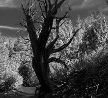 Spooky Tree by BGSPhoto