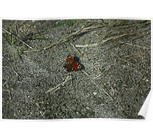 Butterfly Butterflies Insect Poster