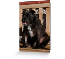 Bailey - The Patterdale (Fell Terrier) VII Greeting Card
