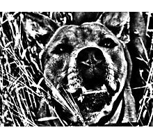 Scary Staff. Photographic Print