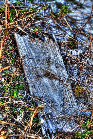 Broken by Virginia N. Fred