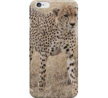 Cheetah in the Wild iPhone Case/Skin