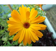 Close Up Flower Photographic Print