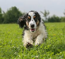 The most affectionate creature in the world is a wet dog.  by Mark Cooper