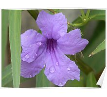 A Petunia, I'm Sure Poster