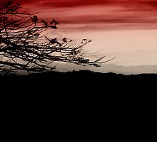 cherry sky by © Karin Taylor