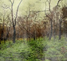 Foggy Woods by moonshinepdise