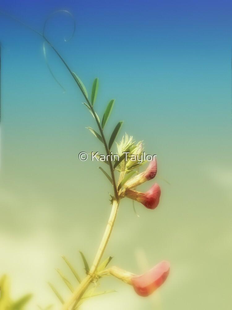 sun flowers by © Karin Taylor