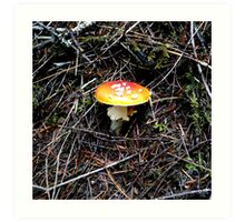 Mushroom (Available in iphone, ipod & ipad cases) Art Print