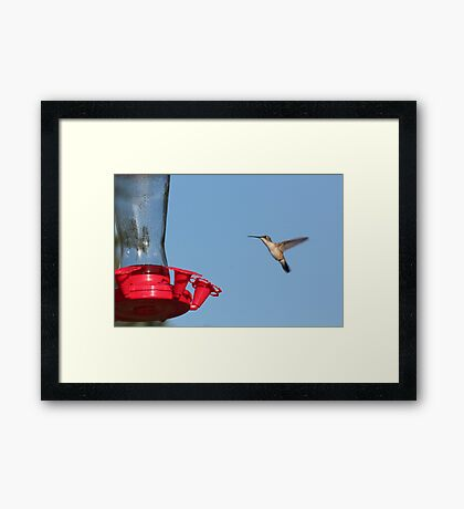 Caught in Flight Framed Print