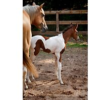 Mare and Colt Photographic Print