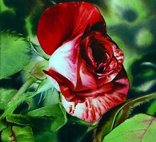 Peppermint Rose - Red Rose Watercolor Painting by Arena Shawn