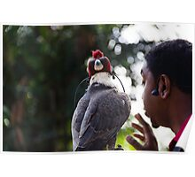 Hawk with eyes covered at a show inside the Jurong Bird Park in Singapore Poster