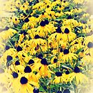Black Eyed Susan Garden by Sharon Woerner