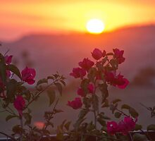 Sunset & Vine  II by Jordan Selha
