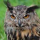 european eagle owl by Declan Carr