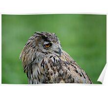 Turkmen (turkmenistan) Owl Poster