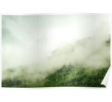 Forest after the rain Poster