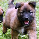 German Shepherd Puppy by Heidi Mooney-Hill
