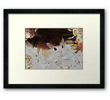 Roborovski Hamster called Cheese Framed Print