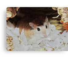 Roborovski Hamster called Cheese Canvas Print