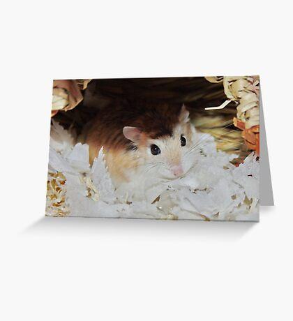 Roborovski Hamster called Cheese Greeting Card
