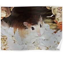 Roborovski Hamster called Cheese Poster