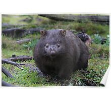 Digwell the Wombat. Poster