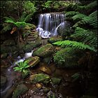 Leura Weeping Rock by Peter Hill