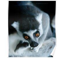 It's a Lemur! Poster
