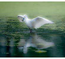 Snowy Egret, Soft Effect Photographic Print