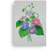 A Morning Glory Canvas Print