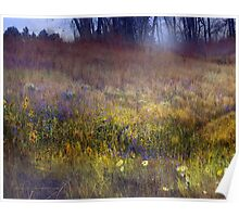fog and light: flowered hillside Poster