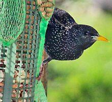 The Diversity of British Birds by missmoneypenny
