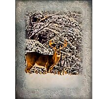 Field of Dreams Buck 2 Photographic Print