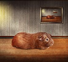 Animal - The guinea pig by Mike  Savad