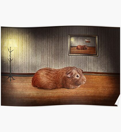 Animal - The guinea pig Poster