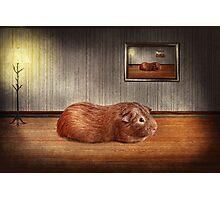 Animal - The guinea pig Photographic Print