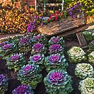Barrow of blooms Roma St Parklands Brisbane by PhotoJoJo