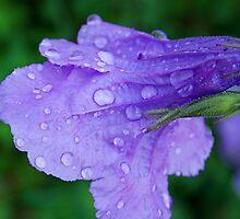Morning Dew by rosaliemcm