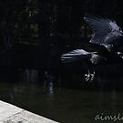 Crow in Flight by -aimslo-