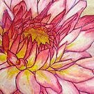 Pink Dahlia by Alexandra Felgate