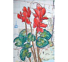Red Cyclamen on the Street Photographic Print