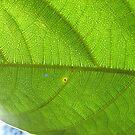 Leaf Veins 2 by FrogGirl