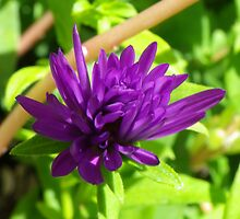 Purple by Bob Hardy