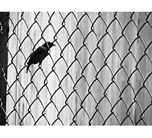 I Know Why The Caged Bird Sings (black and white) Photographic Print