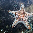 Hello, Sea Star by -aimslo-