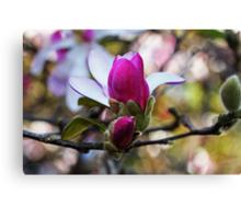 Magnolias In Bloom Canvas Print