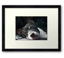 It's Tough Being Adorable Framed Print